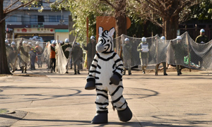 Runaway zebra dies in Japan after golf course police chase