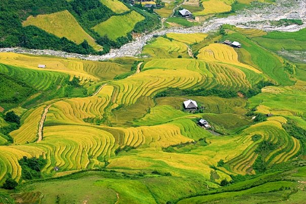 Mu Cang Chai is at its fullest from late September to early October. The terrace fields that have made thousands of backgrounds and helped scores of photographers claim awards will definitely be worth the bumpy road you have to pass to get awed.