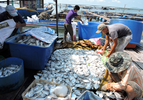Farmers sue 13 seafood plants over fish deaths in southern Vietnam