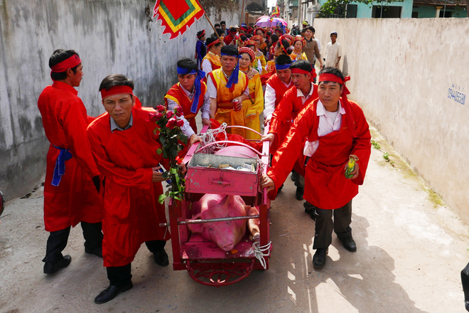 festivals-in-vietnam-not-for-the-faint-hearted