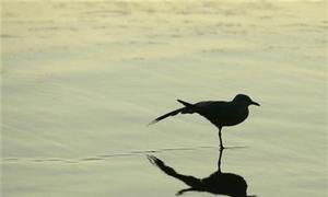 Biodiversity plunges below 'safe' levels