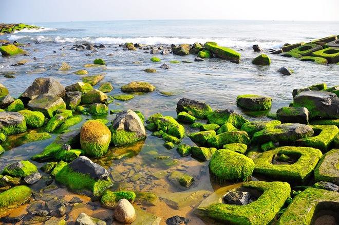 8 cảnh đẹp xứ hoa vàng cỏ xanh làm nức lòng du khách