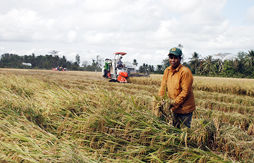 flood-crisis-threatens-to-kill-vietnams-rice-bowl