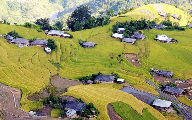 Terraced fields in Hoang Su Phi District are agreed by many to be the satisfying end for the rice tour in northern mountainous Vietnam. Rice here ripens late compared with other places and is in best shape after October 10. Photo by Xuan Hy