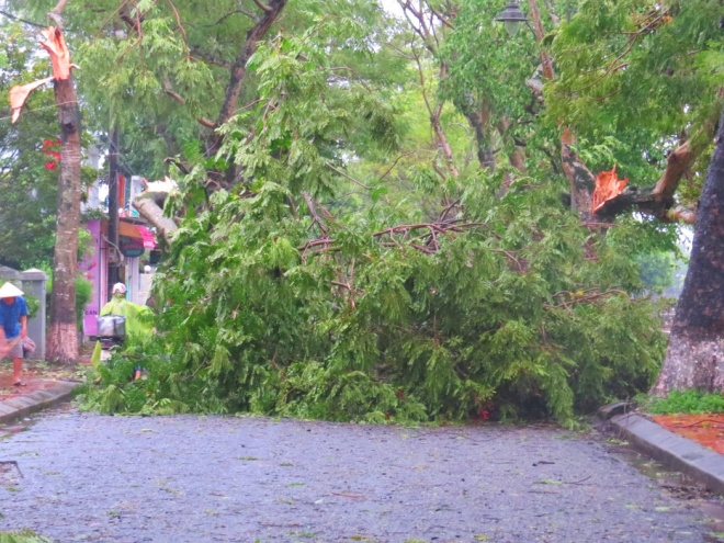 Tropical storm wreaks havoc on Hue's street trees