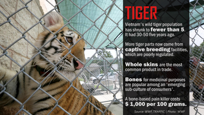 light-at-tunnels-end-vietnam-pledges-tough-action-against-illegal-wildlife-trade