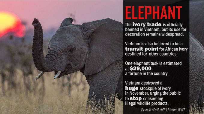 light-at-tunnels-end-vietnam-pledges-tough-action-against-illegal-wildlife-trade-2
