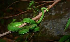 The Most Dangerous Creatures In Vietnam Vnexpress International