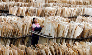 Vietnamese furniture makers hit by dwindling timber supplies