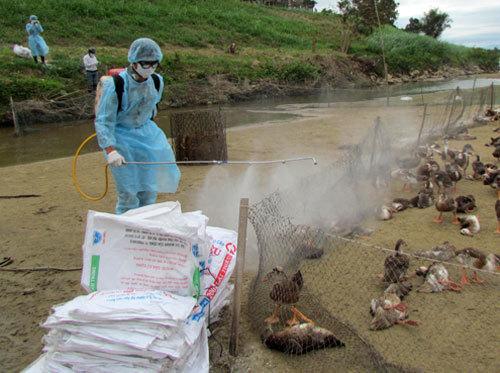 Vietnam raises border alert following Cambodia bird flu outbreak