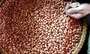 Vietnam to halt imports of five agro-products from India - govt