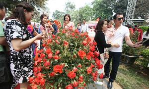Hanoi rose festival falls flat of colorful advertisement