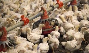 Vietnam halts US poultry imports to prevent bird flu spread - govt