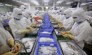 Australian ban on Vietnamese shrimp could drown exporters - trade official