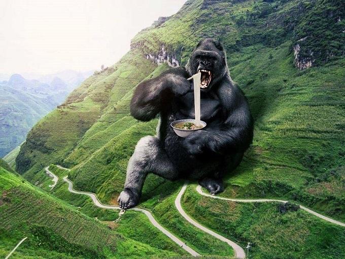 Kong enjoying noodles.