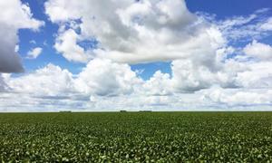 Vietnam's soybean imports to rebound in 2017 - USDA