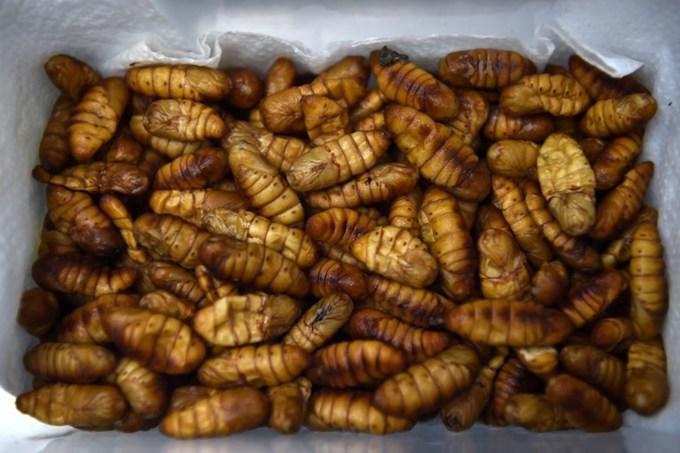 gourmet-grub-thai-fine-diners-explore-insect-cuisine-4