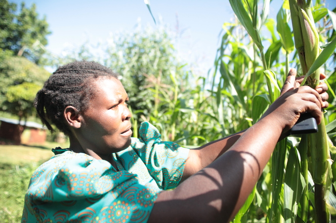 Text message network connects offline farmers in Kenya