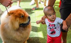 Pooches on parade at Vietnam Championship Dog Show