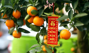 The most expensive Tet decoration? The answer might be bonsai