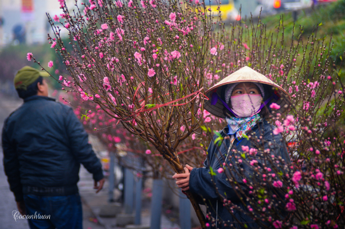 A woman holds a peach blossom branch as she waits for customers at Quang Ba Market in Hanoi. Photo by Cao Anh Tuan