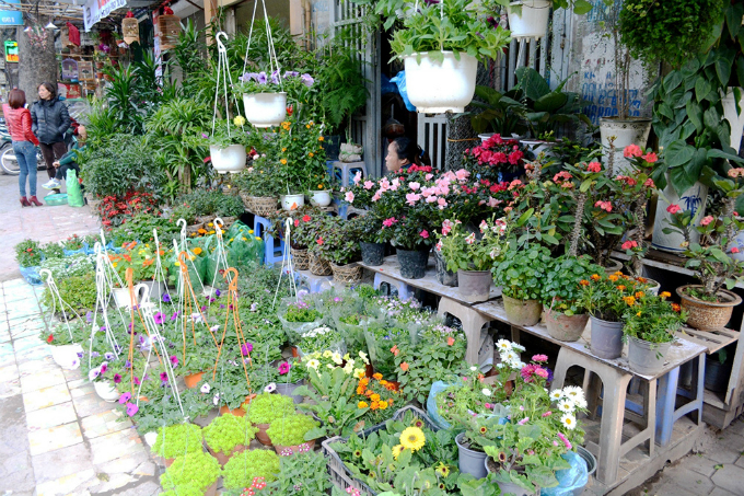 Flower pots are on display at Buoi Market in Hanoi. Photo by VnExpress/Vy An