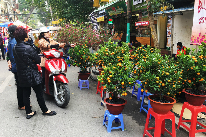 A woman choose a peach blossom branch as kumquat plants are on display at the Hang Luoc Flower Market in Hanoi. Photo by VnExpress/Vy An