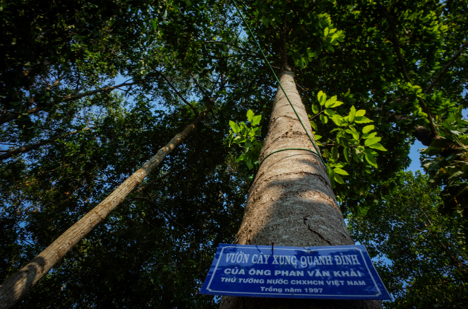 The temple is home to many Dipterocarpus alatus trees that Khai brought from the nearby Tay Ninh Province many years ago. The sign says the garden was planted by Khai in 1997.