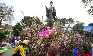 10,000 cherry blossoms bloom over Hanoi at Japanese festival