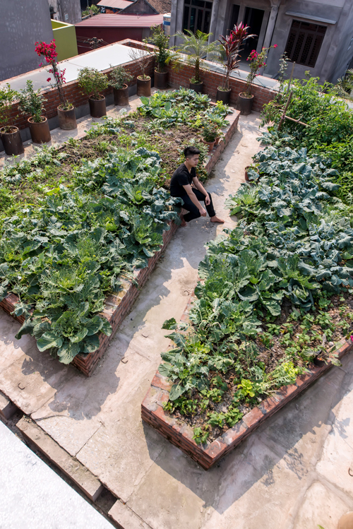 A garden on the rooftop. Photo by VnExpress/Nguyen Tien Thanh