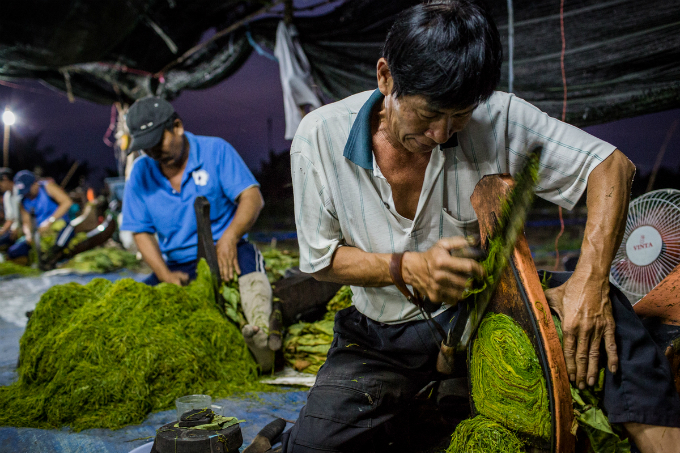 It is quite a process to make tobacco. The brewed bundles will be cut into threads and the worker has to have certain experience to make the threads thin and in the same size. One worker can produce 300-400 kilos of threads per night, said Tran Van Duc, who has been doing this job for over 40 years.