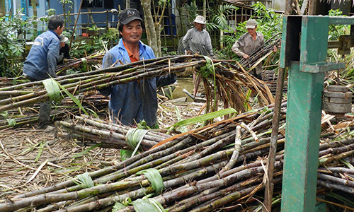 Smuggled sugar a bitter blow for domestic mills in Vietnam