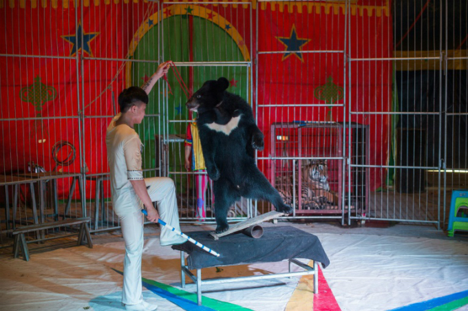 A Harbin black bear performs at the Chinese Prosperous Nation Circus Troupe, which considers its animals a major attraction.