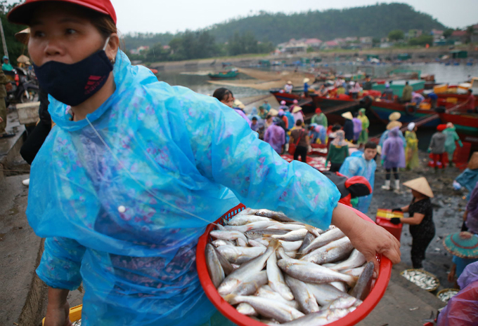 The market sells many types of fish from herring, albacore tuna, scad mackerel, and more.