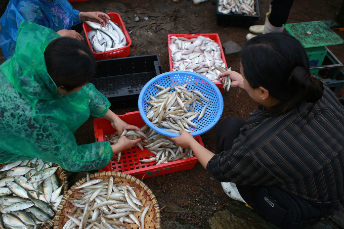 Transaction takes place right at the shore when fishes are freshly caught.