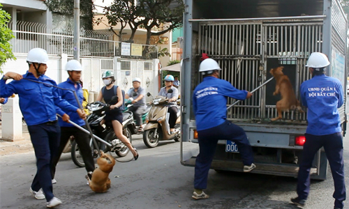HCMC's District 1 seizes unattended dogs, fines owners