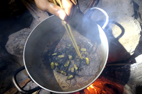 People can roast or fry the spiders with salt and chilies