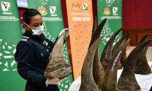 Malaysia seizes record $12 mln rhino horn bound for Vietnam