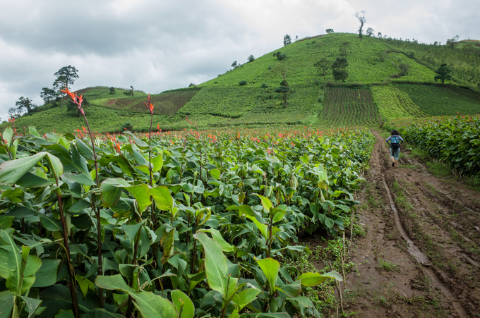Watch the Canna lily flowers bloom as you climb this Central Highlands volcano (send to Hari)