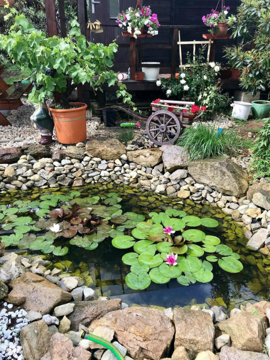 The garden is a gift from her husband, which she usesspecifically as a sanctuary place for anything that reminds them of Vietnam. Photo courtesy of Vu Thanh Huyen.