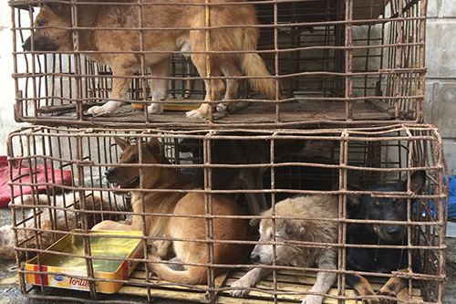 Animal charity backs Hanoi decree against eating dogs