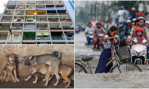 Weekly roundup: Dog meat debate, flat ASEAN prospects, Saigon tour and more