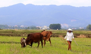 Hanoi's $500-mln horse racing complex to eat up 300 acres of farmland