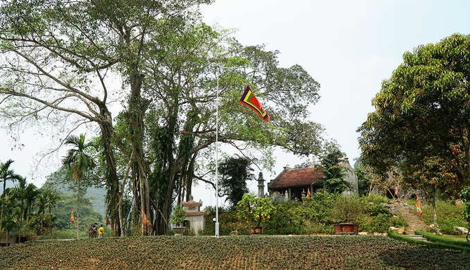 Ninh Binh's 'moving' millennia-old banyan tree