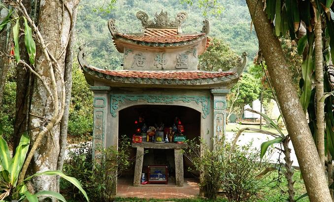 Ninh Binh's 'moving' millennia-old banyan tree - 1