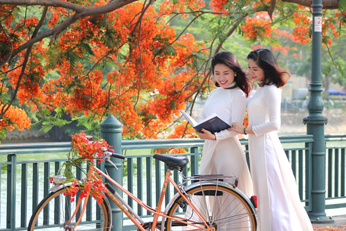 Red blossoms light up northern Vietnam city - 2