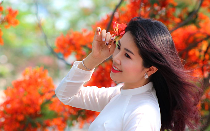 Red blossoms light up northern Vietnam city - 4