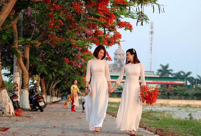 Red blossoms light up northern Vietnam city - 6