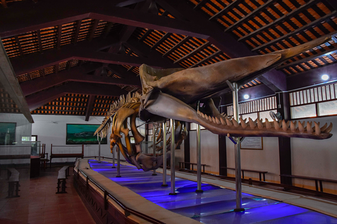 A whale skeleton preserved in a temple on Phu Quy Island in south central province of Binh Thuan. Photo by Dang Le