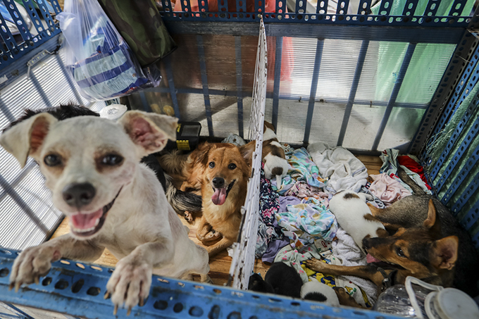 Homeless man dedicates life to rescuing dogs slated for slaughter - 3